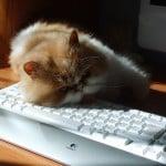 Stefan Zdzialek, Kuba sleeping on keyboard