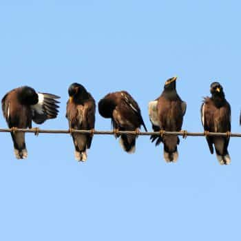 Birds sat on a wire